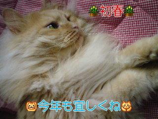 初春 (2).jpg